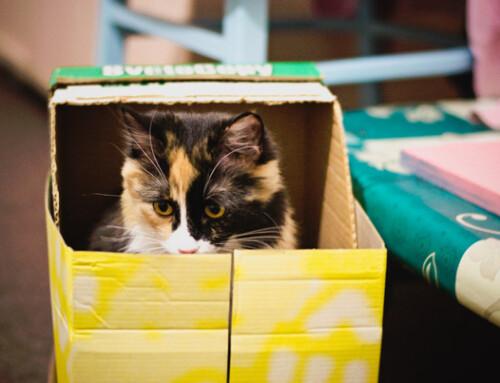 Reformas, decoración y gatos: trío de ases